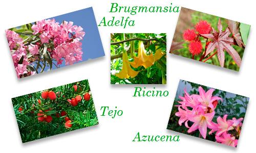 contienen en sus hojas, flores, tallos y semillas productos activos tóxicos que en ingesta