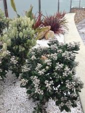 Ornamental jardin 4 - entornoambiental.com
